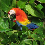 Costa Rica is one of the ten best destinations for birdwatching