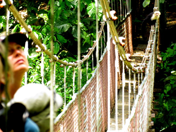 Hanging bridges are one of the best ways to explore the rainforest