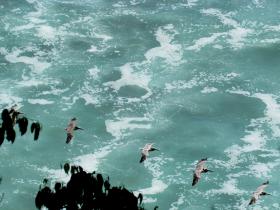 Playa Carate Osa Peninsula