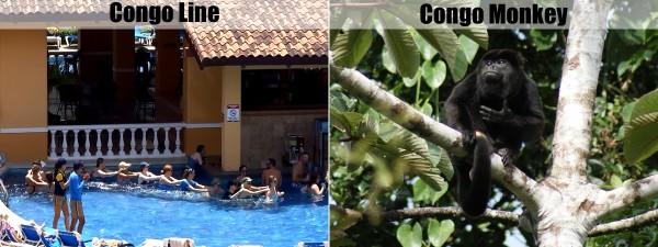 Congo line of congo monkey?